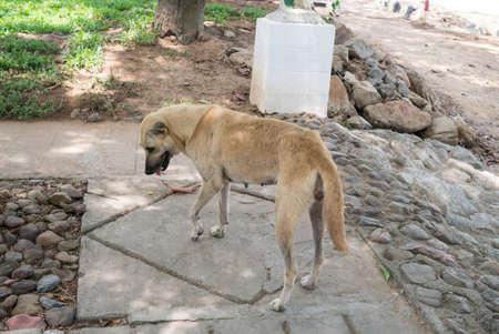 abandoned: Abandoned dog Stock Photo