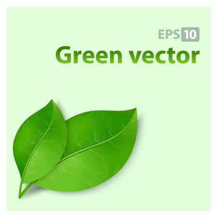 Green nature leaves vector background.