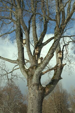 Birdhouses on a tree
