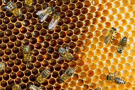 Macrofoto van een bijenkorf op een honingraat met copyspace. Bijen produceren verse, gezonde honing.