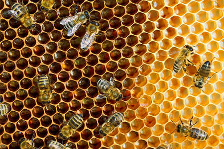 Makrofoto eines Bienenstocks auf einer Wabe mit Exemplar. Bienen produzieren frischen, gesunden Honig.