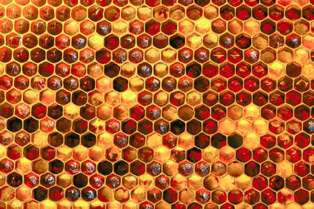 Background texture and pattern of a section of wax honeycomb from a bee hive filled with golden honey i Stockfoto