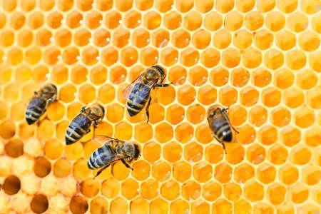 Fotografía macro de una colmena de abejas en un panal con copyspace. Las abejas producen miel fresca y saludable.