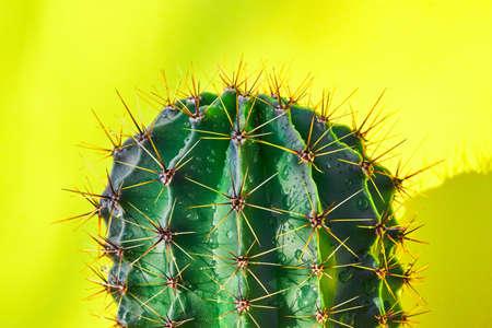 Green cactus Summer style. Artistic Design. Yellow background. Фото со стока - 139785135