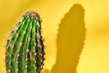 Green cactus Summer style. Artistic Design. Yellow background