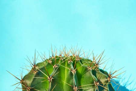 Green cactus Summer style. Artistic Design. Yellow background. Фото со стока - 139787534