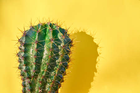 Green cactus Summer style. Artistic Design. Yellow background.