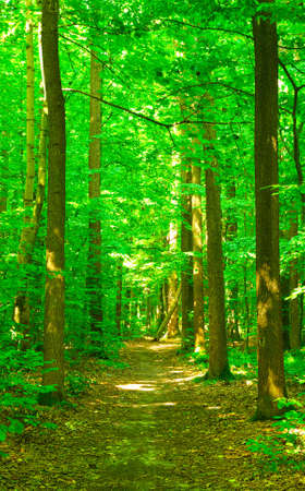 Path in summer green forest photo