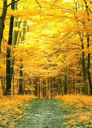 Arbres colorés de l'automne dans la forêt