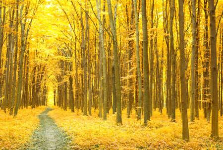 Arbres automne coloré dans la forêt