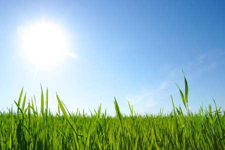 l'herbe verte, le ciel bleu et nuages ??blancs