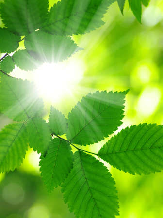 rays sun: Sun beams and green leaves Stock Photo