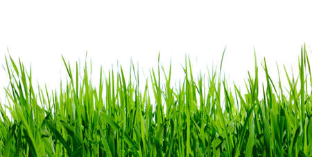 green grass on white background photo