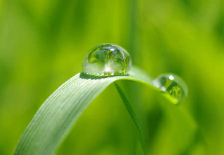 sun drop: water drops on the green grass