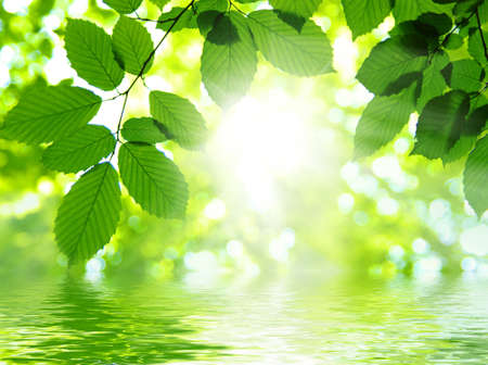 sun drop: Sun beams and green leaves Stock Photo