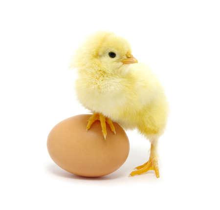 oeuf brun et poulet isolé sur un fond blanc