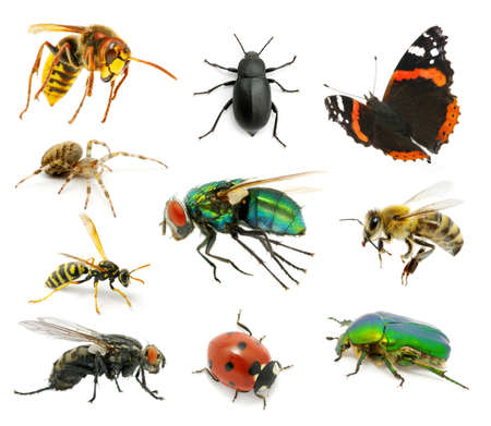 Set of insects on white Stock Photo - 12605418
