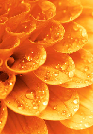 Abstract petals of a flower with drops Stock Photo - 12613446