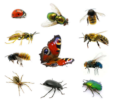 Set of insects on white Stock Photo - 12613439