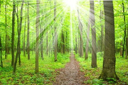 soleil vert forêt et les ombres
