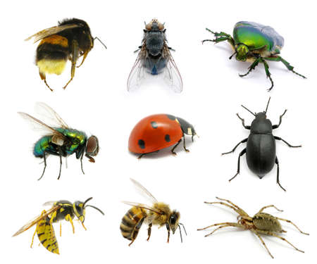 Set of insects on white Stock Photo - 13089217