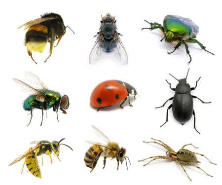 wesp: Set van insecten op wit Stockfoto