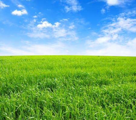 Gebied van groen gras en lucht Stockfoto