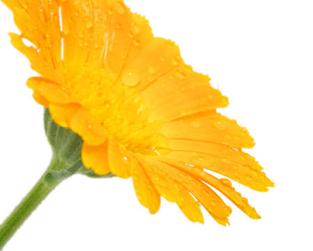 Orange flower with drops of water photo