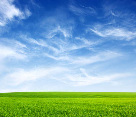 white sky: Field of green grass and sky