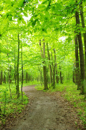 Path in spring green forest Stock Photo
