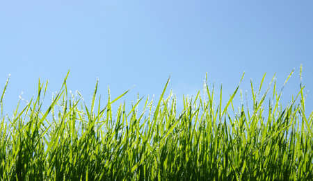 Wet green grass and blue sky  photo