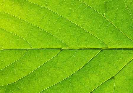 close up of green leaf texture Stock Photo - 13777006