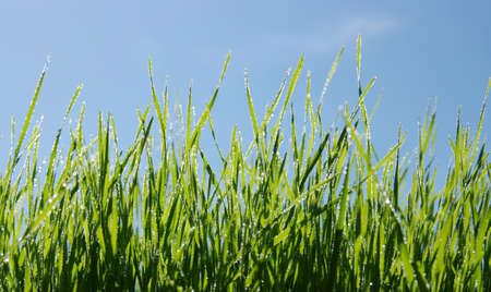 Wet green grass and blue sky  Stock Photo - 13776979