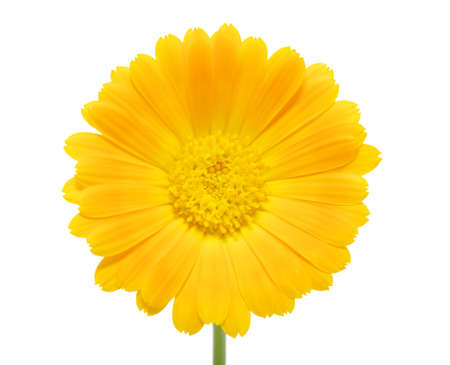 orange flower on a white background Stock Photo - 14393426
