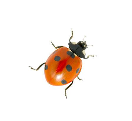 흰색에 고립 된 빨간 무당 벌레
