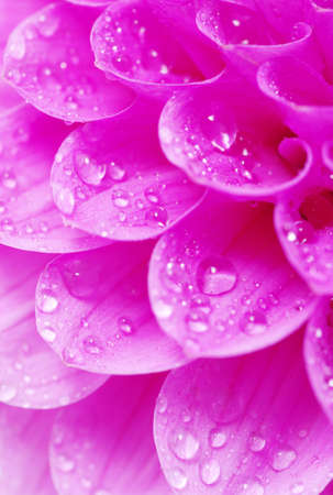 Abstract petals of a flower with drops photo