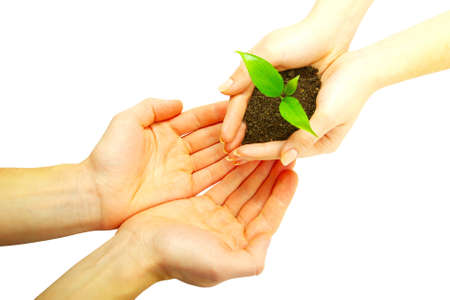 holding a plant between hands  photo