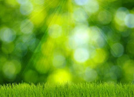 l'herbe et fond vert défocalisé Banque d'images