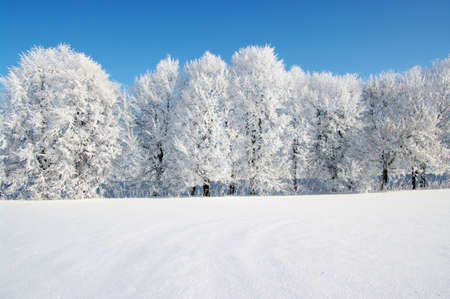 Arbres givrés contre un ciel bleu Banque d'images