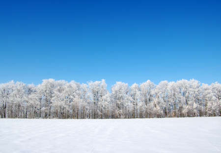 snowy field: Frosted trees against a blue sky Stock Photo