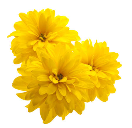 yellow gerbera isolated on: yellow flower isolated on white background Stock Photo