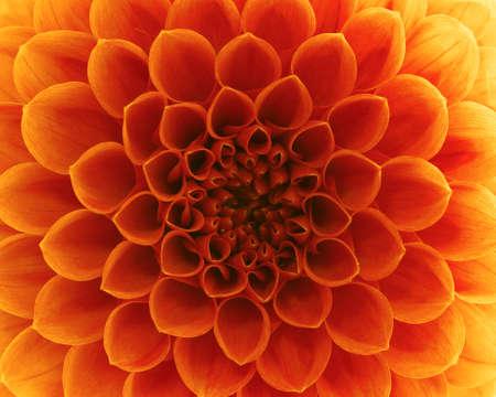 R?sum? de fleurs et de beaux p?tales Banque d'images