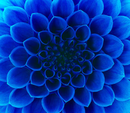 blue flowers: Abstract petals of a flower