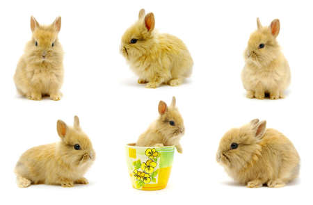 Small rabbits isolated on white  photo