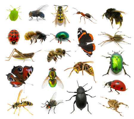 Set of insects on white photo