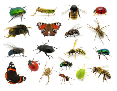 Ensemble de insectes sur fond blanc