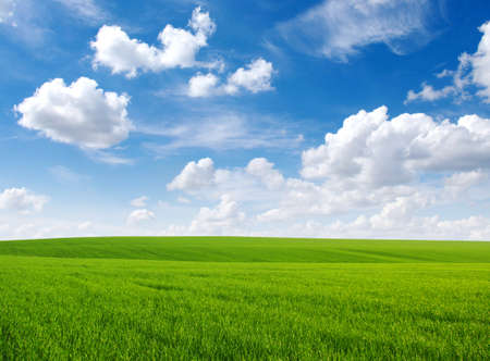 groen gras veld en heldere blauwe hemel Stockfoto