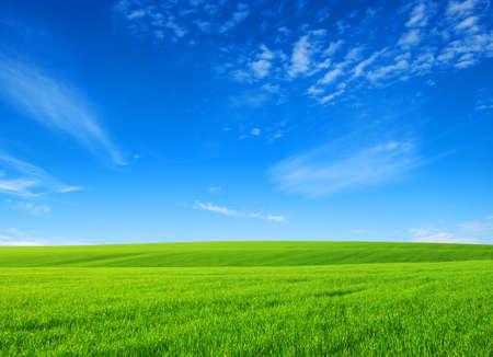 champ d'herbe verte avec des nuages ??blancs