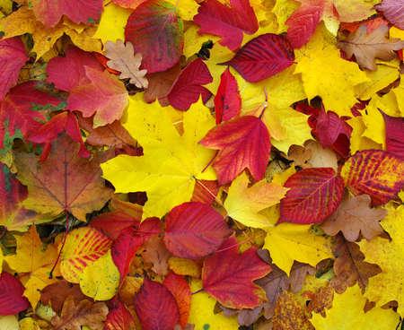 Baissé les feuilles d'automne Banque d'images - 23239606