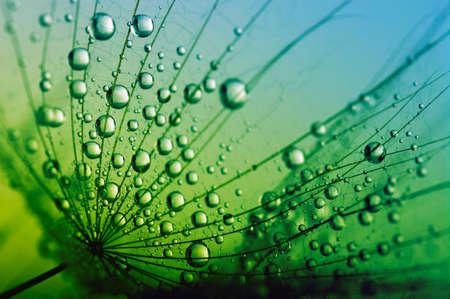 물 방울과 민들레 씨앗의 추상 매크로 사진